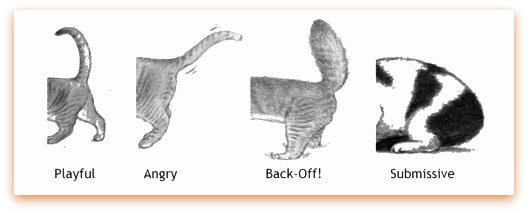 Cat communication made easy