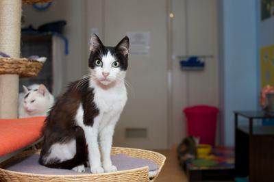 Advantages And Disadvantages Of Cat Boarding