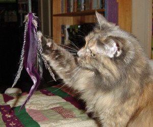 Cat toys and activities are safe for your cat