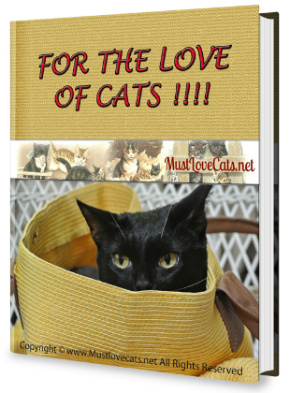 Cat Lovers eBook