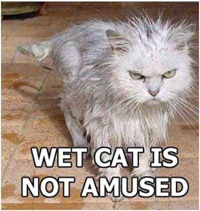 Five Mistakes Cat Owners Make