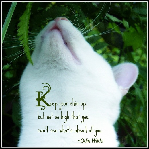 Cat Loss Quotes Cool Best Cat Quotes Inspirational Quotes Of The Day New Cat Loss Quotes