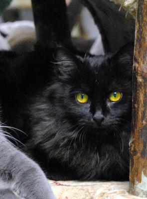 Photo by Furkids: Harry Houdini (cat for adoption)