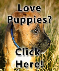 Love puppies? All about dogs and puppies