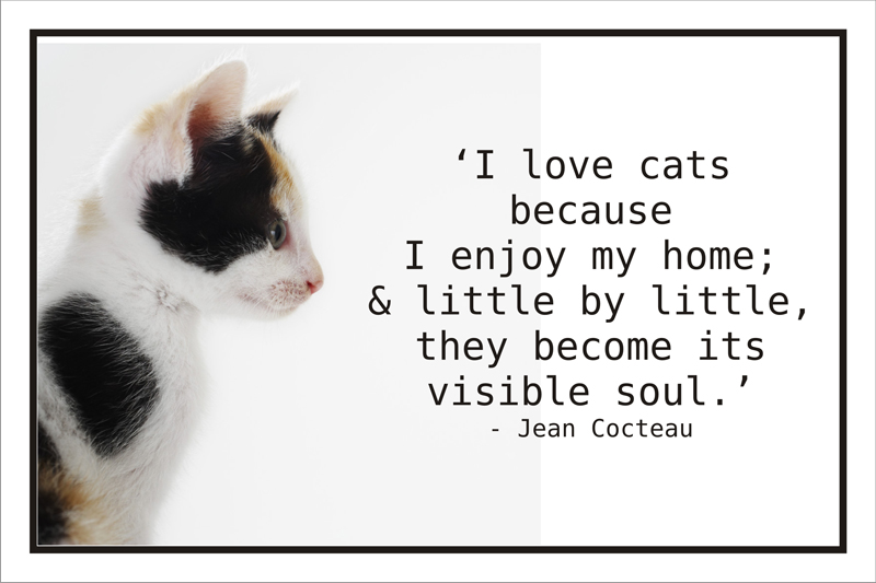 Top 10 cat quote