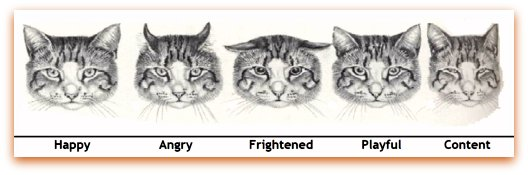 mange treatment for cats