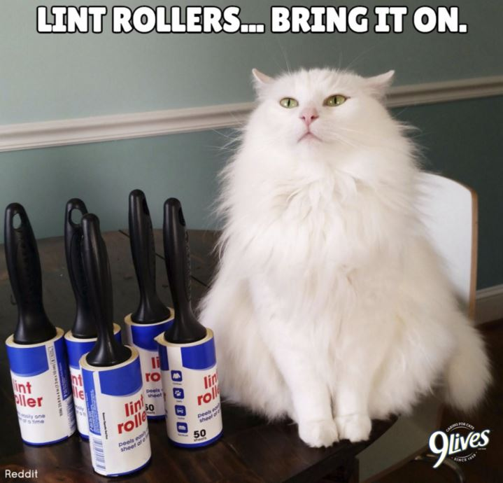 Cat lint rollers