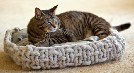 knitted cat bed